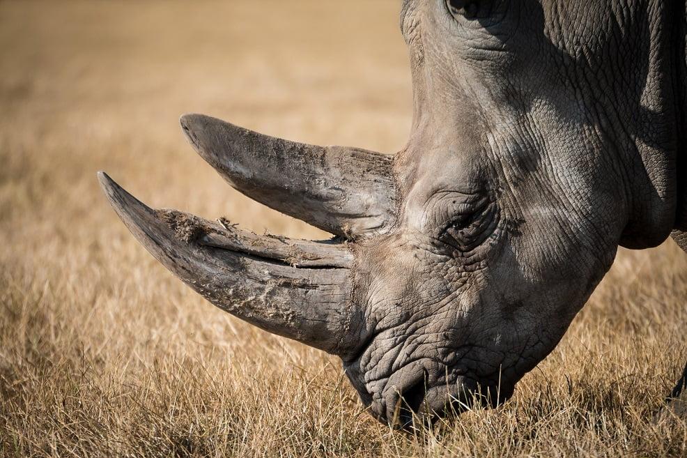Rinoceronte na África do Sul - Fonte Pexels